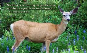 gentle strength