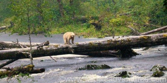 www wildlifeadventures com